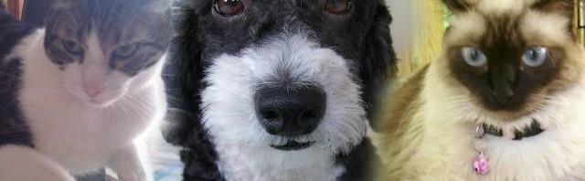 guauymiau tu blog de mascotas