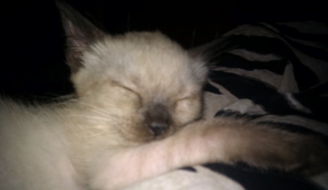 gato durmiendo placidamente