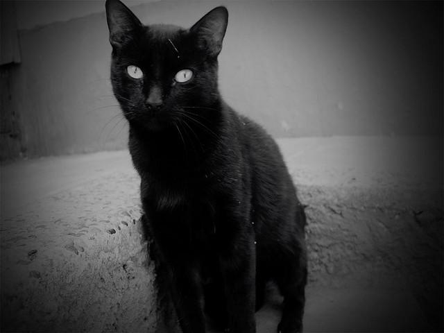 El gato negro guau y miau - El gato negro decoracion ...