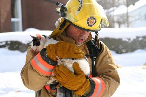 Gato rescatado por un bombero