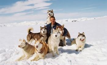 pelicula bajo cero 8 perros