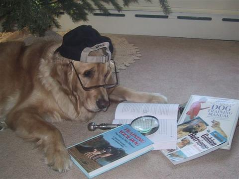 Perro leyendo libros de adiestramiento