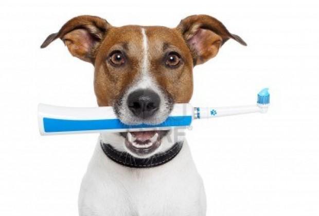 Perro listo para cepillarse los dientes