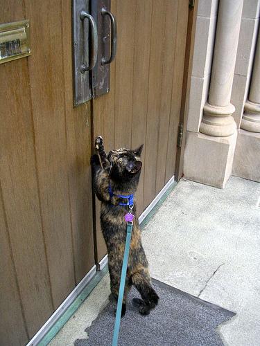 Gato quiere que le abran la puerta