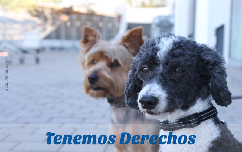 Derechos de los perros del mundo
