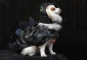 Perro disfrazado en Halloween