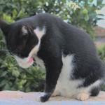 Gato Naranjito bañandose