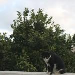 Naranjito, el gato en su naranjo