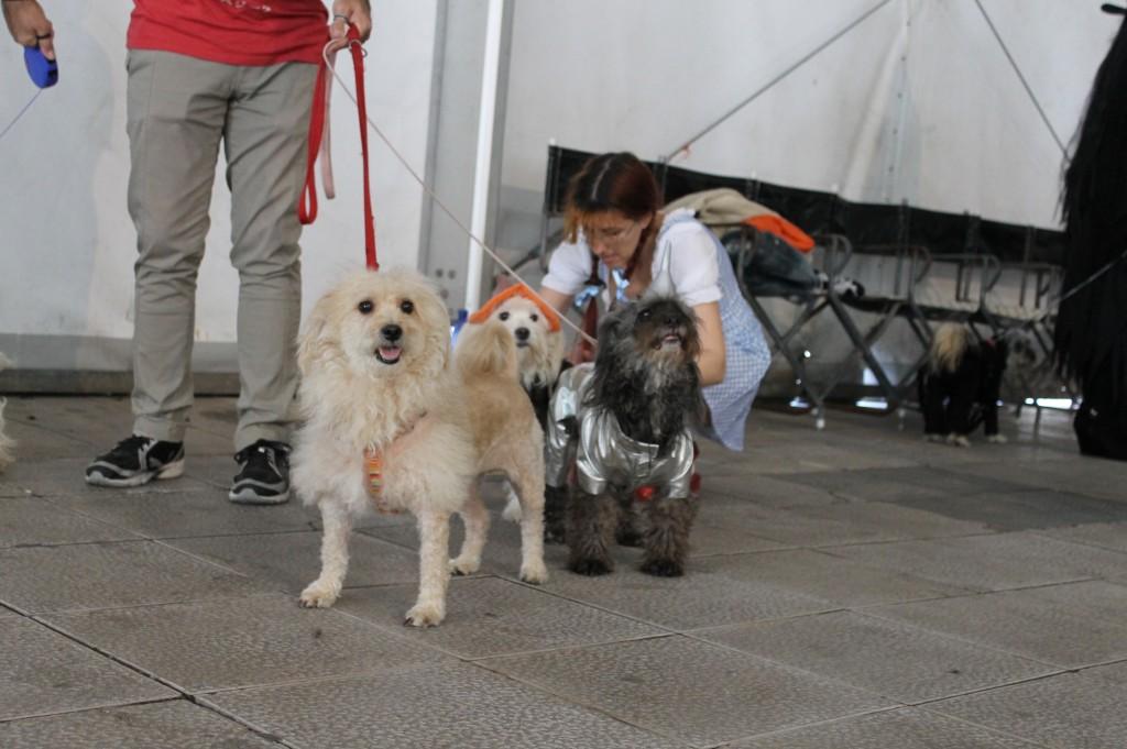 Tres perros disfrazados