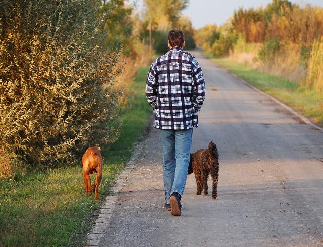 Ir de paseo con perro