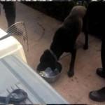 Perros de rescate en Pemex
