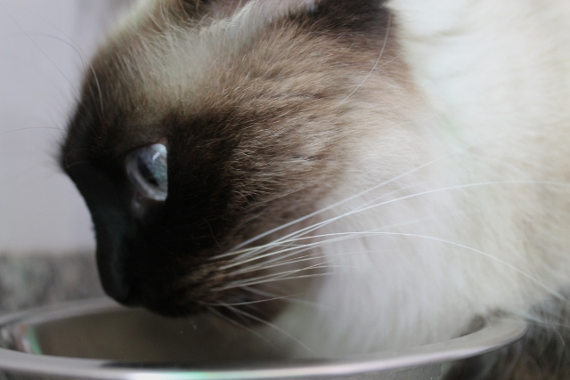 Gata Maggie de Guau y miau