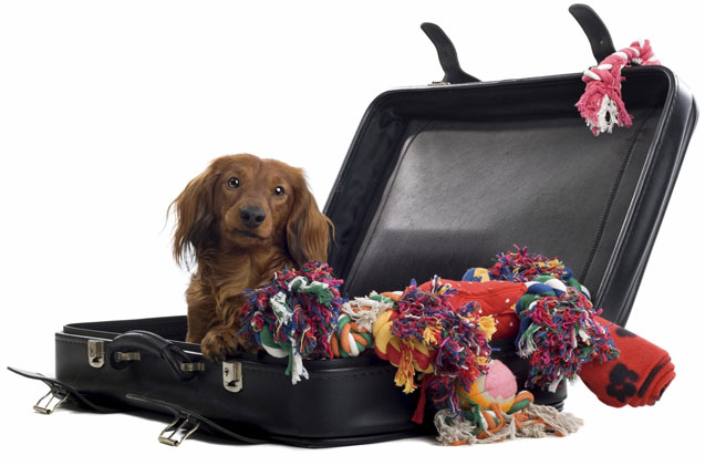 Perro hace el equipaje