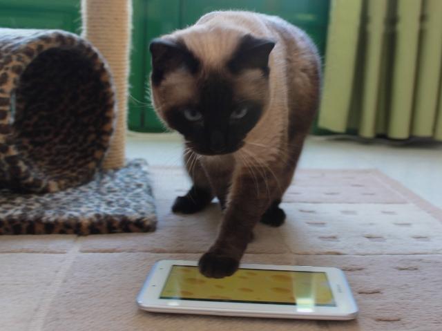 Gata vicky jugando con tablet