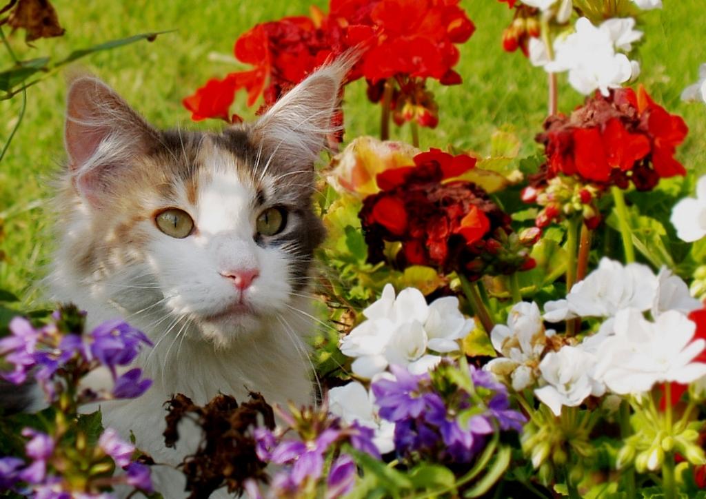 Gato amante de las flores