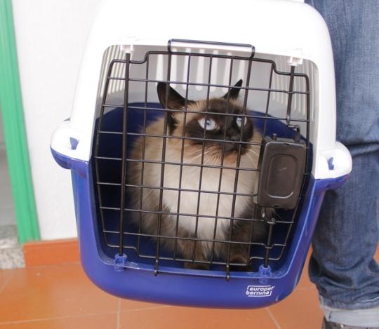 Gato en transportin homologado para viaje
