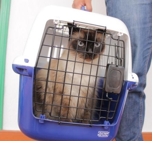 Gato enfadado en transportin para viaje