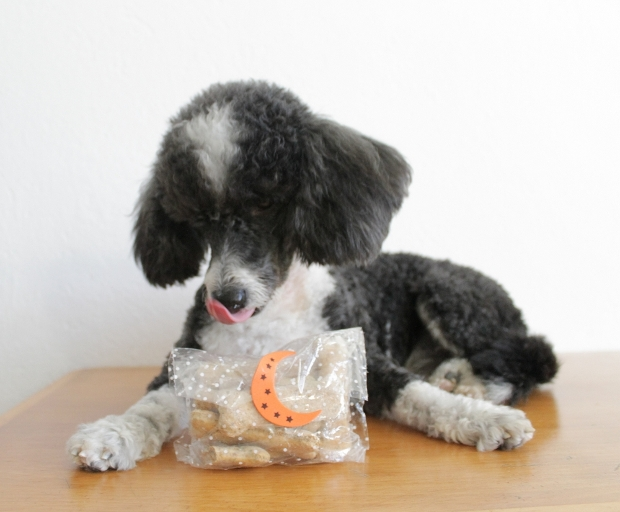 Ozzy con sus galletas para perro de tartacan