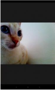 Captura de gato con aplicación móvil  Snapcat